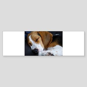 beagle sleeping Bumper Sticker