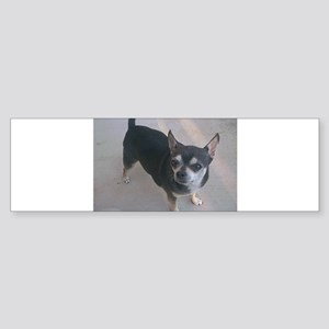 chihuahua full 3 Bumper Sticker