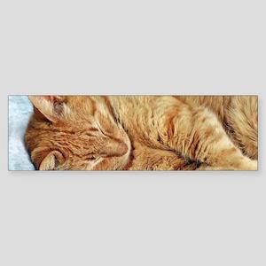 Sleepy Kitty Bumper Sticker