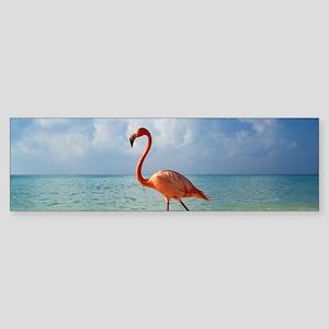 Flamingo On The Beach Bumper Sticker