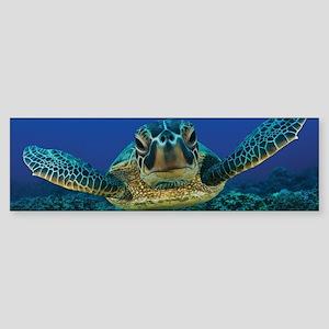 Turtle Swimming Bumper Sticker
