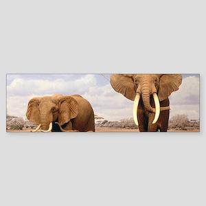 Family Of Elephants Bumper Sticker