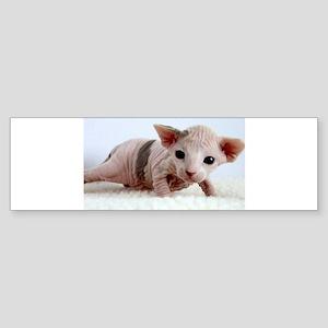 sphynx kitten Bumper Sticker