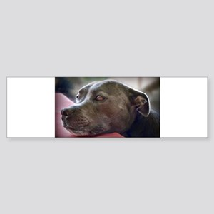 Loving Pitbull Eyes Bumper Sticker