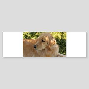 golden retriever grass Bumper Sticker