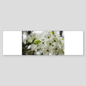 Speckled Sakura Bumper Sticker