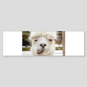 Funny Alpaca Smile Bumper Sticker