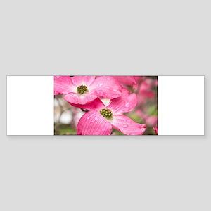 Spring rain Bumper Sticker