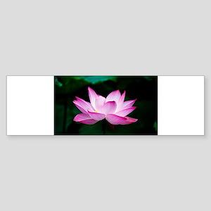 Indian Lotus Flower Bumper Sticker