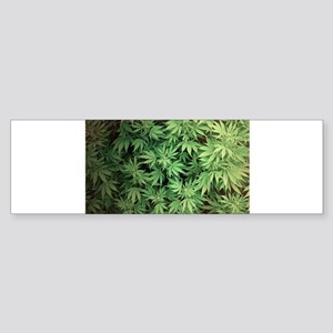 Marajuana Weed Pot Bumper Sticker
