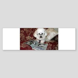 You just Gotta Love a Bichon Bumper Sticker