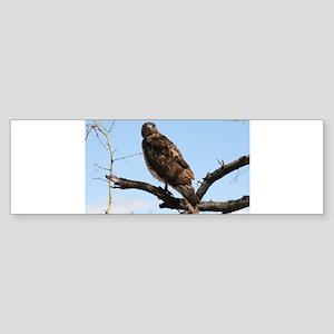 Red-tailed Hawk on tree Bumper Sticker