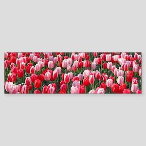 Red & Pink Tulips Holland Netherlan Bumper Sticker