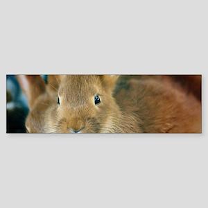 Animal Bunny Cute Ears Easter Bumper Sticker