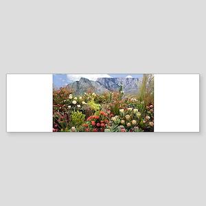 South African flower display in blo Bumper Sticker