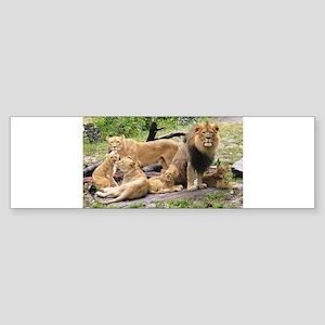 LION FAMILY Sticker (Bumper)