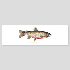 Colorado River Cutthroat Trout Sticker (Bumper)