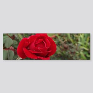 Lone Ranger Red Rose Sticker (Bumper)