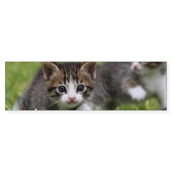 Cat_2015_0102