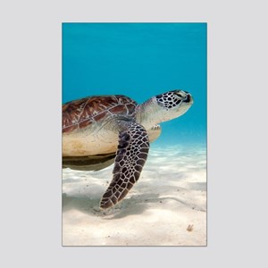 Sea Turtle Poster Print (Mini)