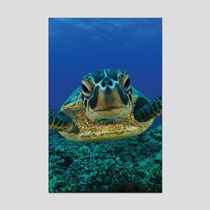 Turtle Swimming Poster Print (Mini)