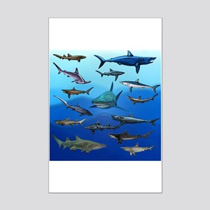 Aquatic Animals Posters - CafePress