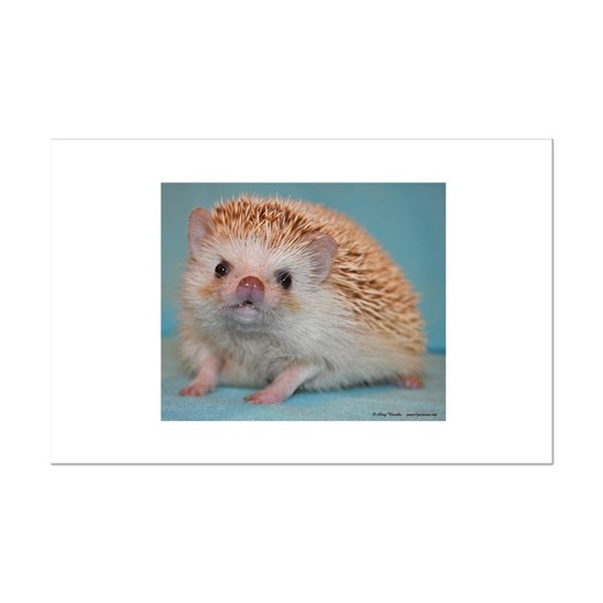 Romeo The Hedgehog Mini Poster Print By Amyw Cafepress