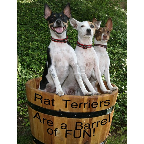 Rat Terriers are a barrel of fun - photo p. marks