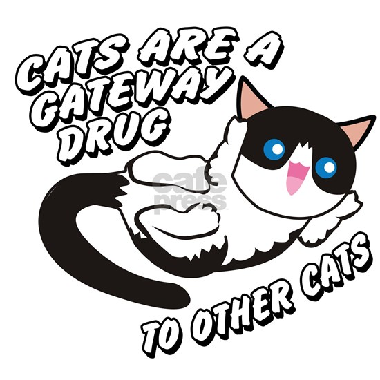 Cats Are A Gateway Drug To Other Cats