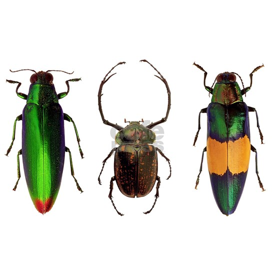 Colorful Insects
