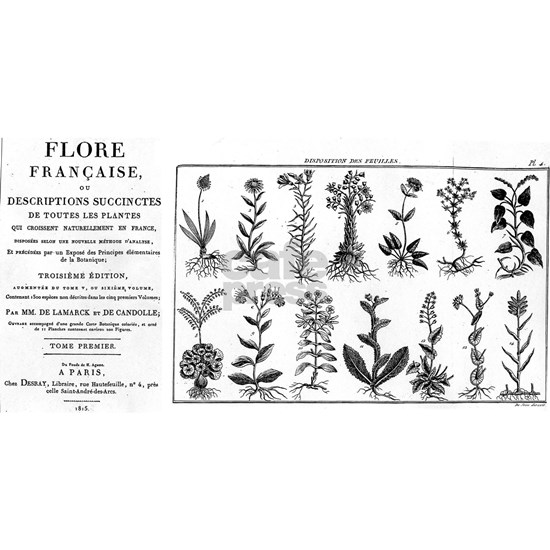 Flore Francaise (Beautiful Plant World)