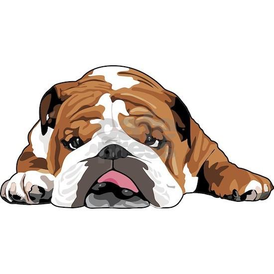 Teddy the English Bulldog