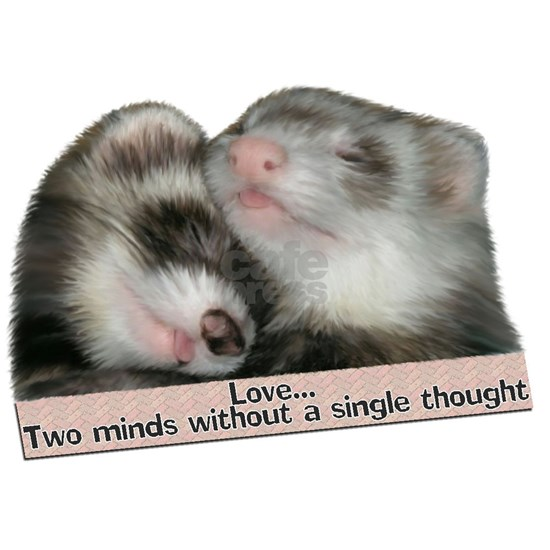 Two Minds Ferret