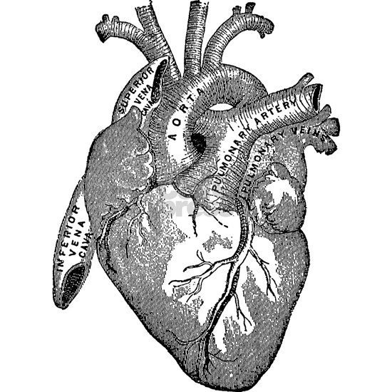 Anatomical Heart - Black