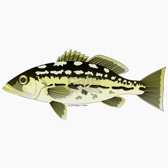 a9e58780 ... fish Trucker Hat. Calico Kelp saltwater bass t. Calico Kelp saltwater  bass t