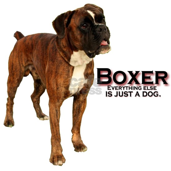 everything boxer