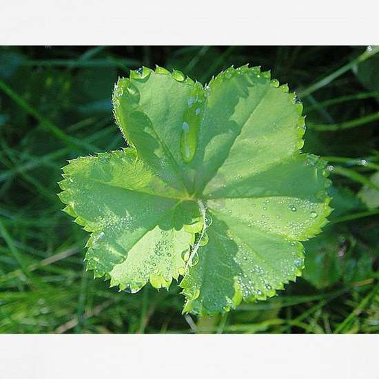Pretty leaf with waterdrops
