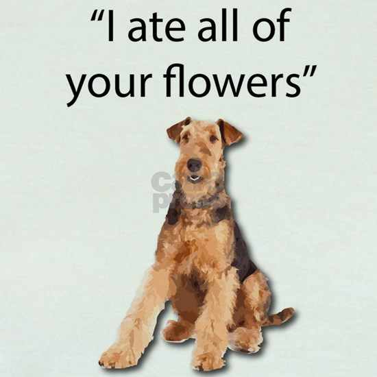 Rowdy Airedale Terrier Ate Your Flowers
