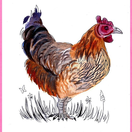 Water Colour Chicken