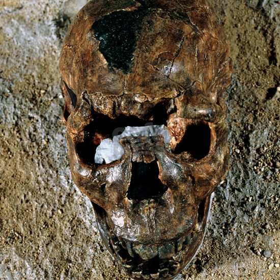 Fossilised skull of a Homo erectus boy from Kenya