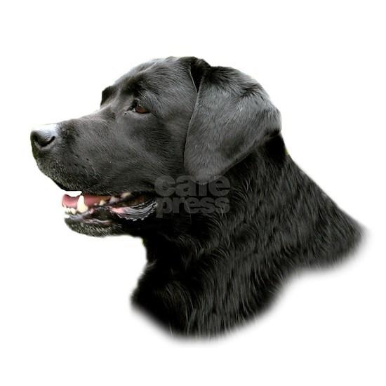 Black Lab Profile
