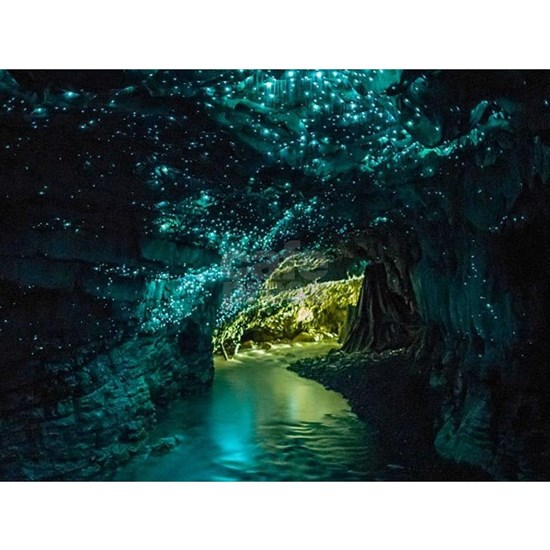 WAITOMO GLOWWORM