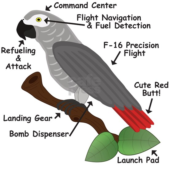 Anatomy of an African Grey Parrot