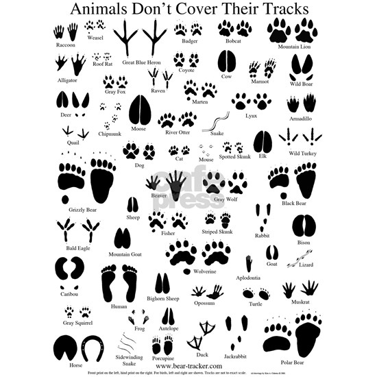 animal tracks poster 8 5 by 11
