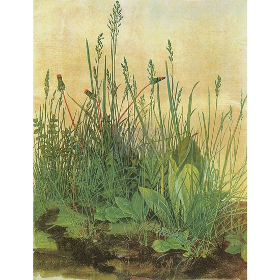 Large Piece of Turf by Albrecht Durer