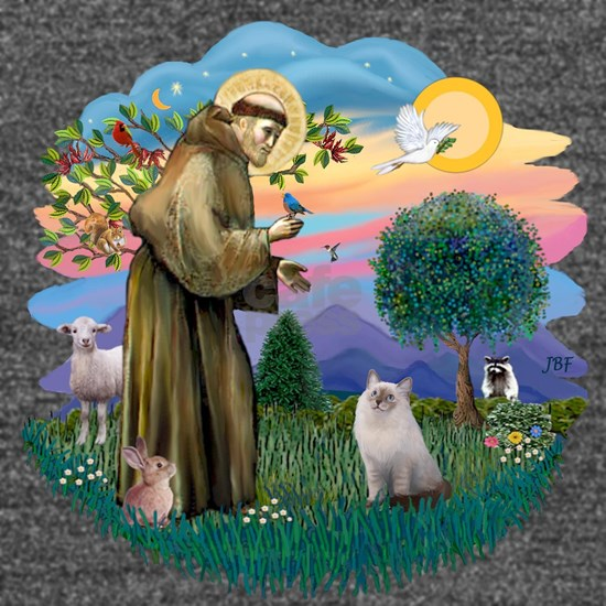 St Francis - Blue Cream Ragdoll cat