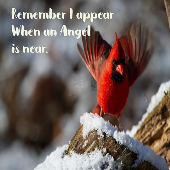 Cardinals appear when an angel is near.