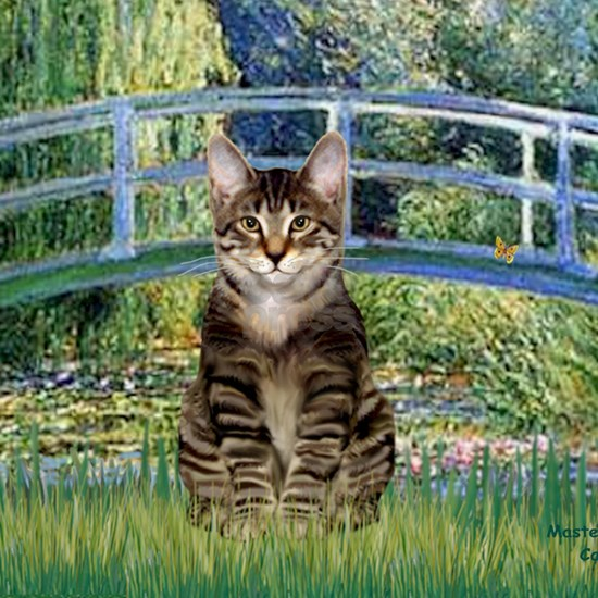 Bridge - Tabby Tiger cat 30
