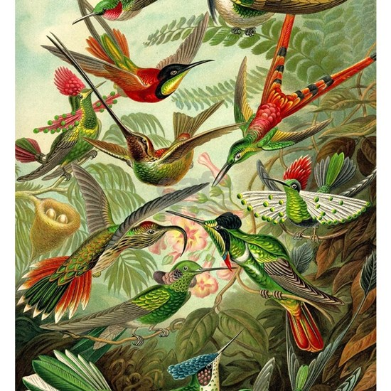 Vintage Hummingbirds Decorative