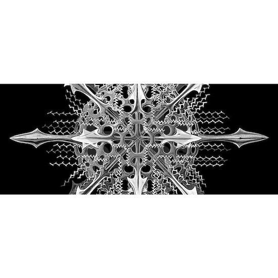 Symmetry, a Diatom by Ernst Haeckel